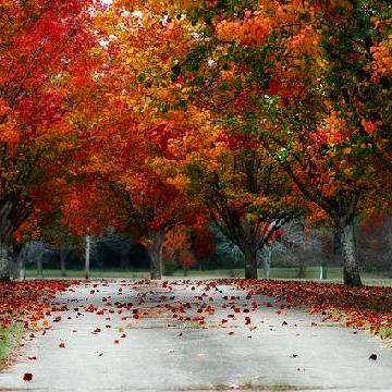 5 piante per l'autunno